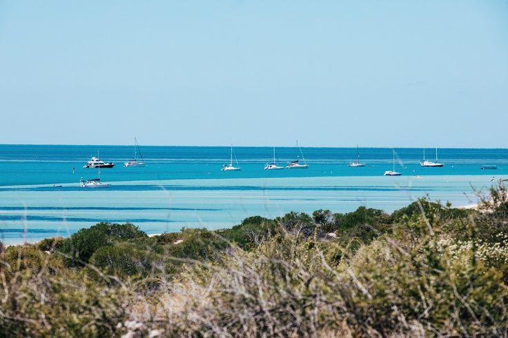 Denham foreshore - Shark Bay world heritage area