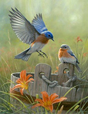 "Summer Morning Blues by Joe Hautman | acrylic | previous pinner quote:  ""I love Bluebirds… I miss watching them in my backyard."""
