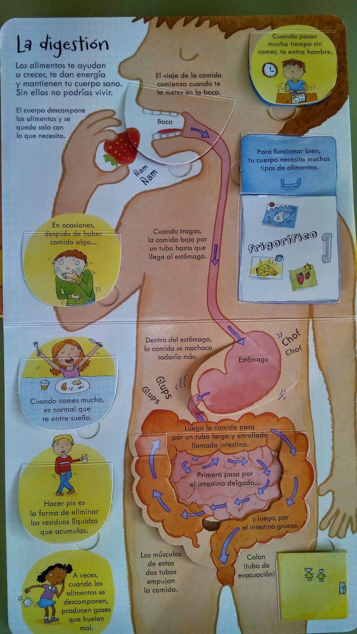 sistema digestivo para niños - Buscar con Google