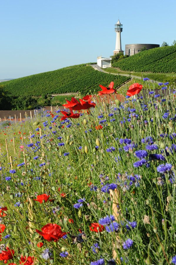 44 best images about les incontournables en champagne on for Champagne marne