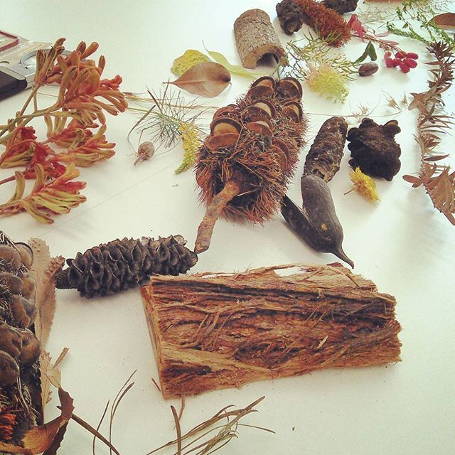 A trail of Australian flowers, seedpods, gum tree bark and plants. Inspiration for a drawing workshop.  From the Leaves & Seeds Drawing Workshop at Australian Botanic Garden - Mount Annan, 11th Jan 2017. Image via @naturescolourpalette (Instagram) botanic account of Creative Process Workshop.