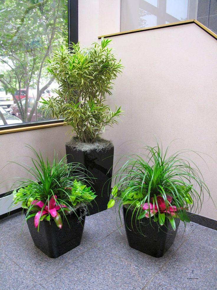 140 best Indoor plants images on Pinterest Indoor gardening