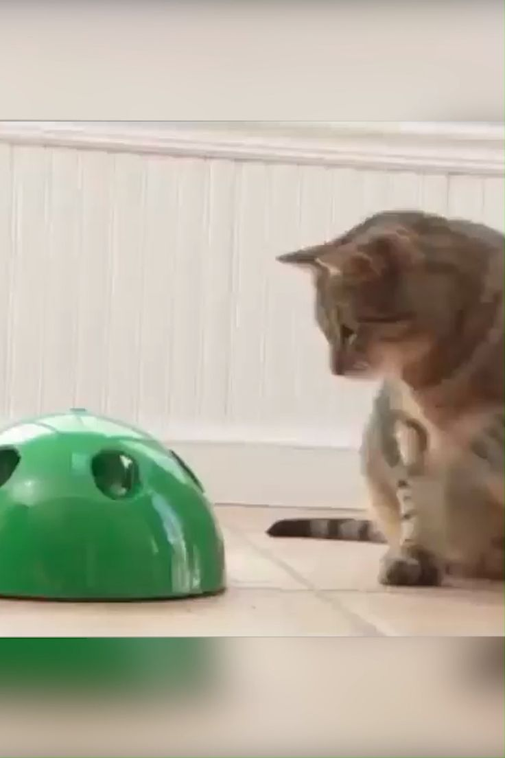 Funny Cat Interactive Toy At Scratching Device For Cat Sharpen Claw Pop Cat Training Toy [Video] | Pop cat, Animals, Cats