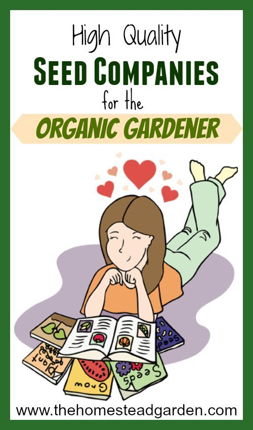 17 Best ideas about Organic Vegetable Seeds on Pinterest