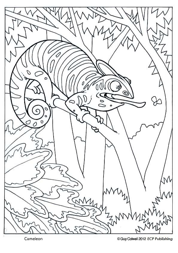 Realistic coloring pages of animals endangered realistic for Endangered species coloring pages
