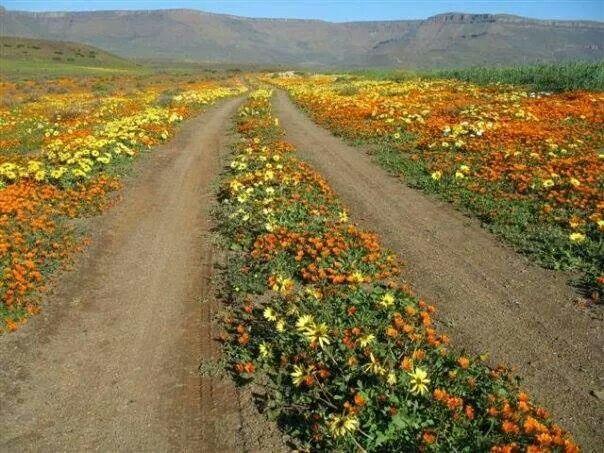 Namaqua road