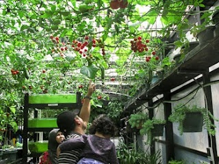 Hanging Tomato Garden   This Would Be Fantastic!