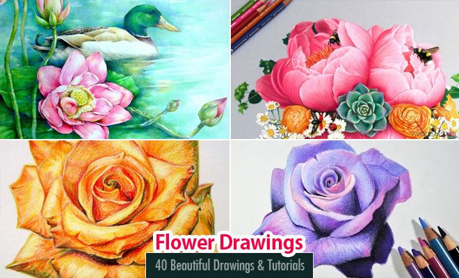 40 Beautiful Flower Drawings and Tutorial Videos for you. Read full article…