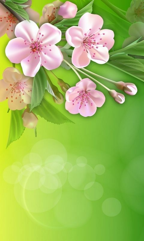 Bird spring flowers Wallpapers Pictures