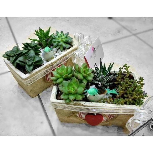 Succulent - kalpli seramik vazoda Isparta çiçek gönderimi