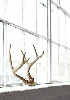 window #antlers