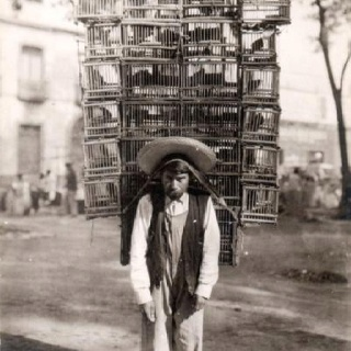 Pajarero - 1900-1920