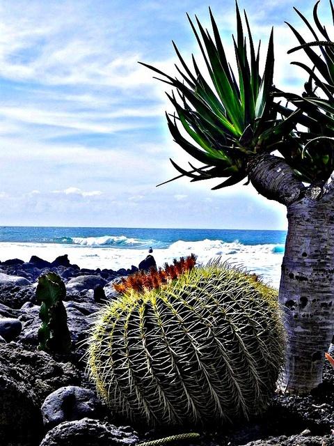 #Lanzarote - Vulkaninsel mit exotischer Landschaft und grandioser #Architektur. Die Mischung aus schwarzem Vulkansand und weißen Mauern mit üppigen tropischen Pflanzen oder #Kakteen ist einmalig. Das ganze Jahr über herrschen Frühlingstemperaturen.