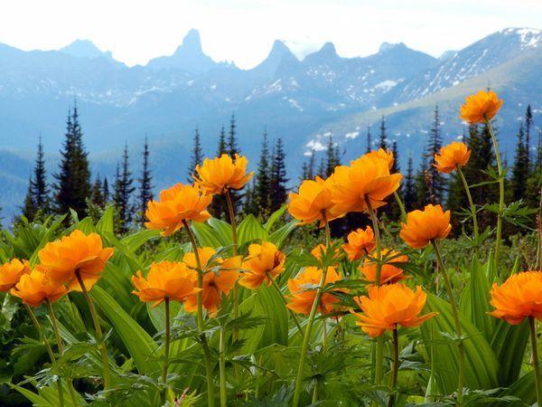 <p>Photo: Flowers in a Siberian field</p>
