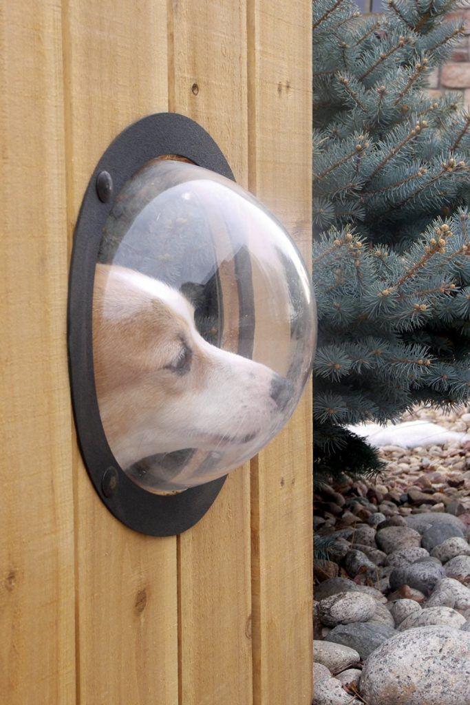 Haben Sie zuhause einen Hund, der oft gegen den Zaun springt? Wenn Sie ein durchsichtiges Fenster in den Zaun bauen, kann Ihr Hund einfach etwas mehr entdecken. Sie brauchen lediglich eine durchsichtige Schüssel aus Kunststoff und einen Ring, um sie am Zaun zu befestigen. Ihr Hund kann nun herrlich hindurchschauen. Schauen Sie sich hier unten …