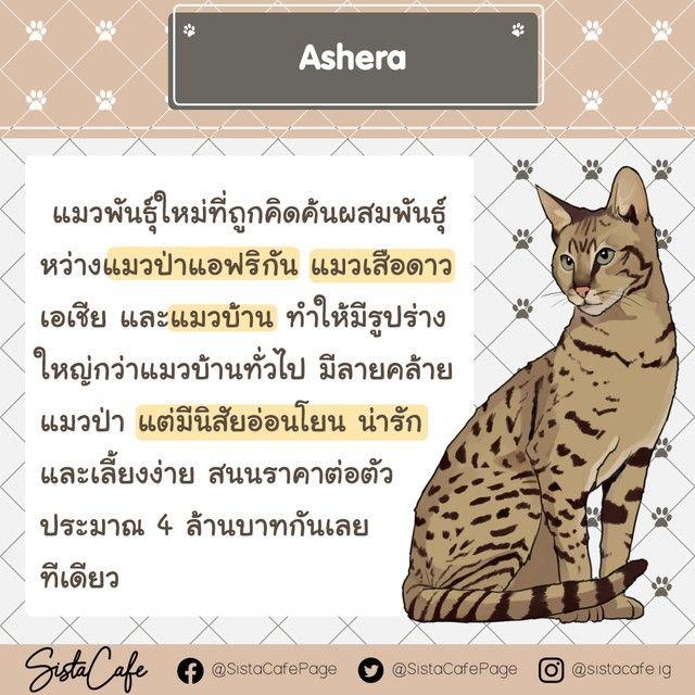 10 อ นด บ แมวท ค าต วแพงท ส ดในโลก ทาสแมวต องร องขอช ว ต Part 2 ในป 2021 แมว