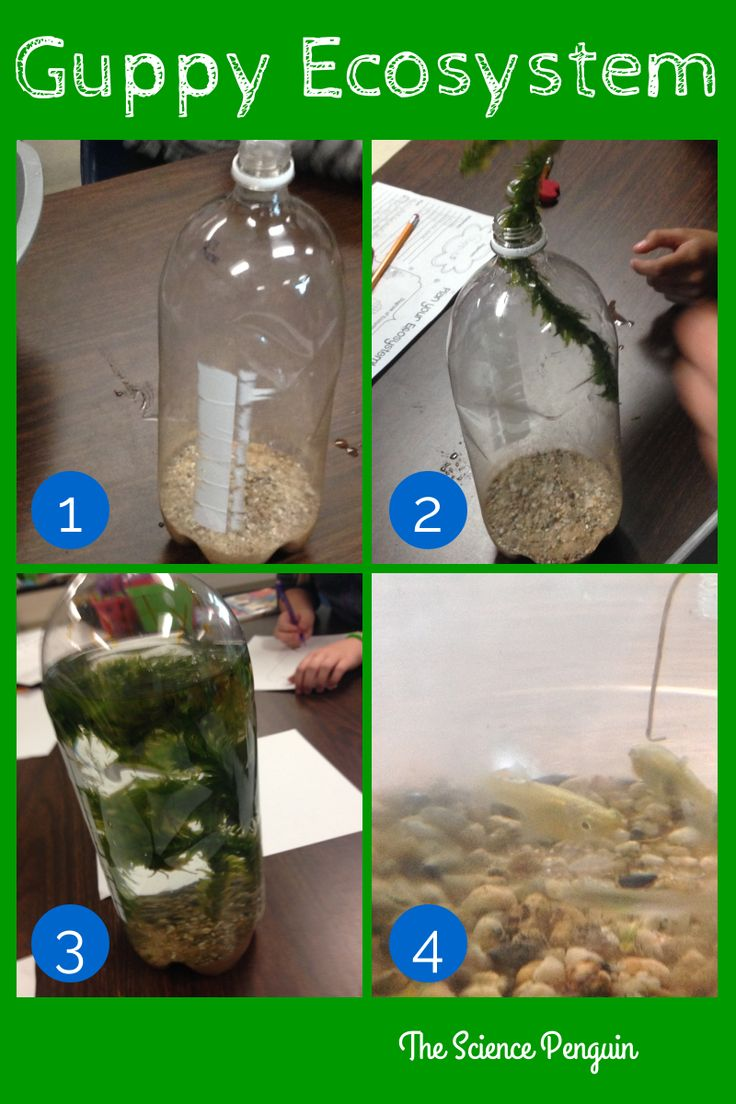Science biomes