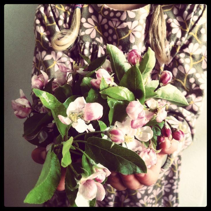 Æbleblomst. Apple blossom  rebeccapersson.com