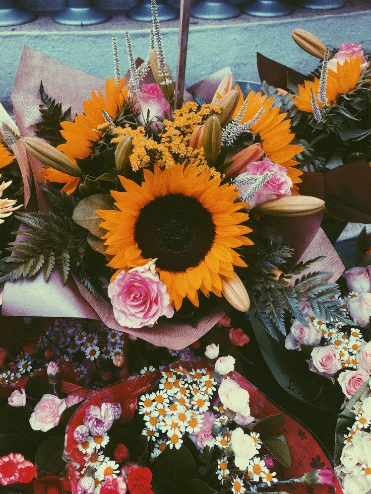 sunflower <a class=