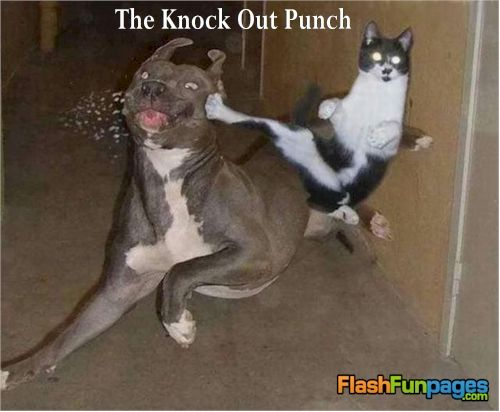 Tags: funny animals, funny cat pictures, funny dog pictures, funny pets. Posted in Cute Stuff, Fail Photos, Funny, Funny Animals, Funny Pictures | Comments ...