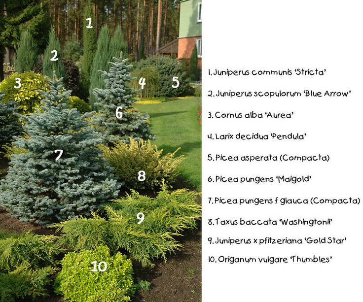 Labeled conifer design//KBN049.jpg photo by onlymyflo