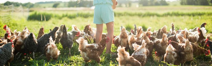 Feather Down Farm Days - The best-loved family farm holiday