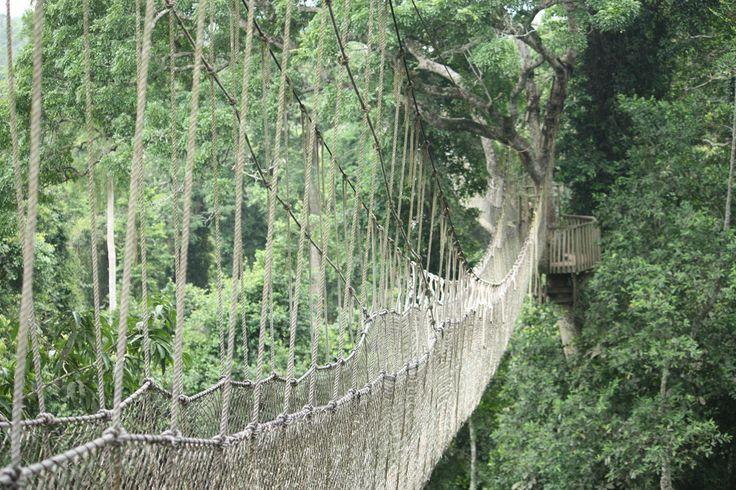 *****Localizada na floresta tropical do parque nacional de Kakum, a passarela é formada por sete pontes separadas que são penduradas em árvores a quase 40 m do chão. Com 304 m de caminho, parece que elas foram construídas com materiais da própria natureza, mas são feitas de cabos de metal, alumínio, pedaços de madeira e ainda tem redes de segurança para que as pessoas não caiam.