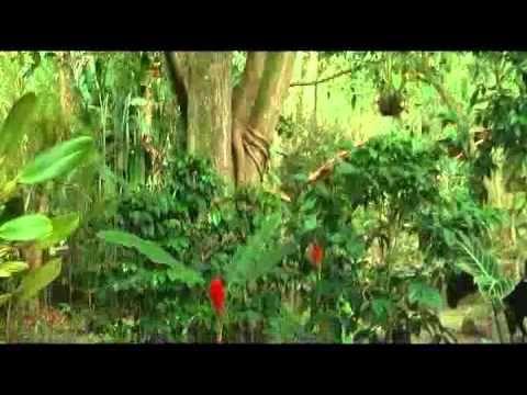 En este video una presentadora colombiana de nombre Ximena Ausleia hace alago de su pais por su diversas variedad de fauna y flora.Ella menciona la importancia de los biodiversidad porque dan un aire puro y lagos producen agua potable para todo los colombianos.Asi mismo ella menciona que los colombianos deben cuidar todo la biodiversidad porque su pais esta sufriendo mucha extincion de animales y vegetales.