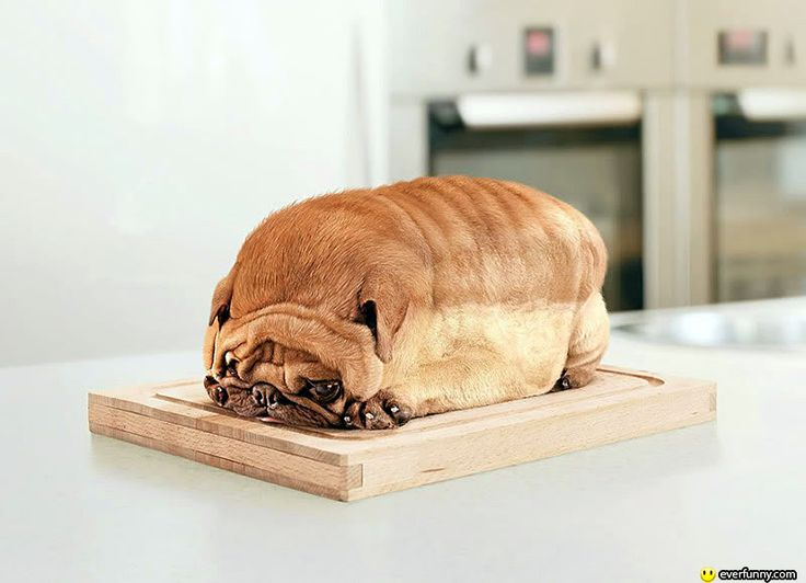Puppy LoafPuppies, Photos Manipulation, Loaf, Breads, Pugs, Funny Dogs Pictures, Funny Animal, So Funny, Animal Funny