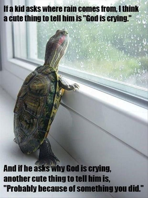 174450f770b69642176bbe99cd3320e8 rain go away go outside 62 best omg funny turtles (there will be s lot) images on