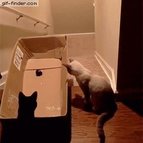 Guy tricks cat into sliding down stairs in box | Gif Finder – Find and Share funny animated gifs
