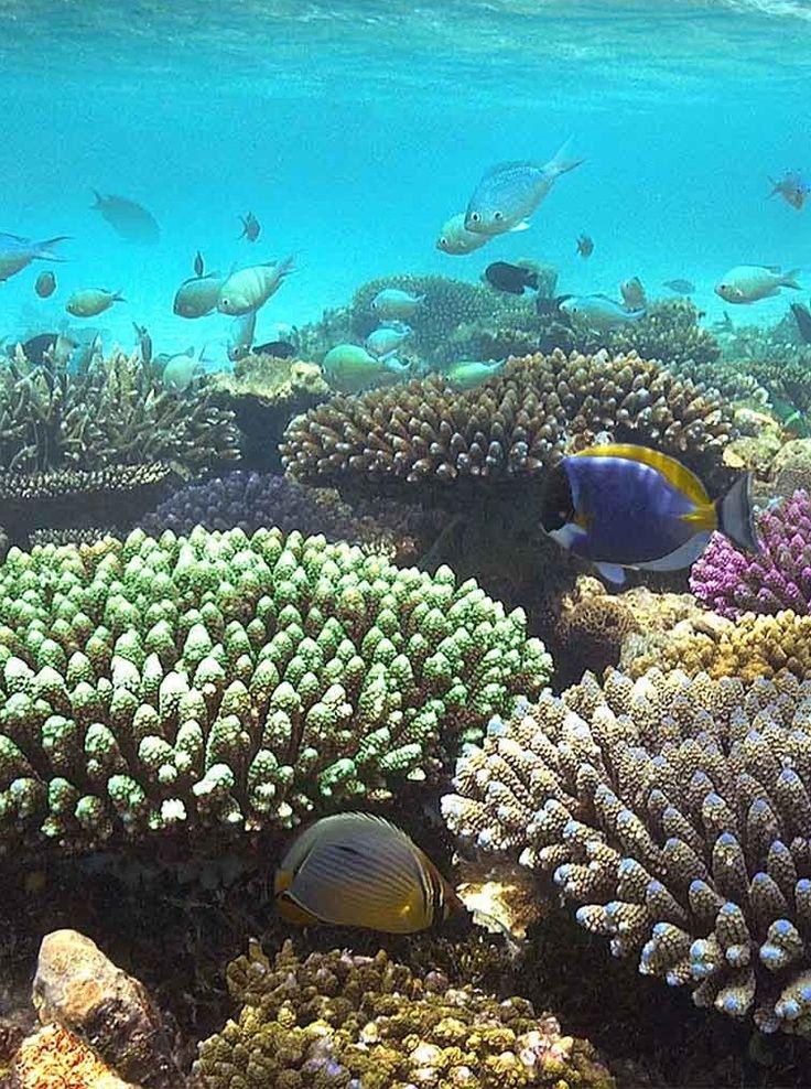Avez-vous déjà #plongé dans un #aquarium géant ? #Nouvelle #Calédonie #récif #corallien