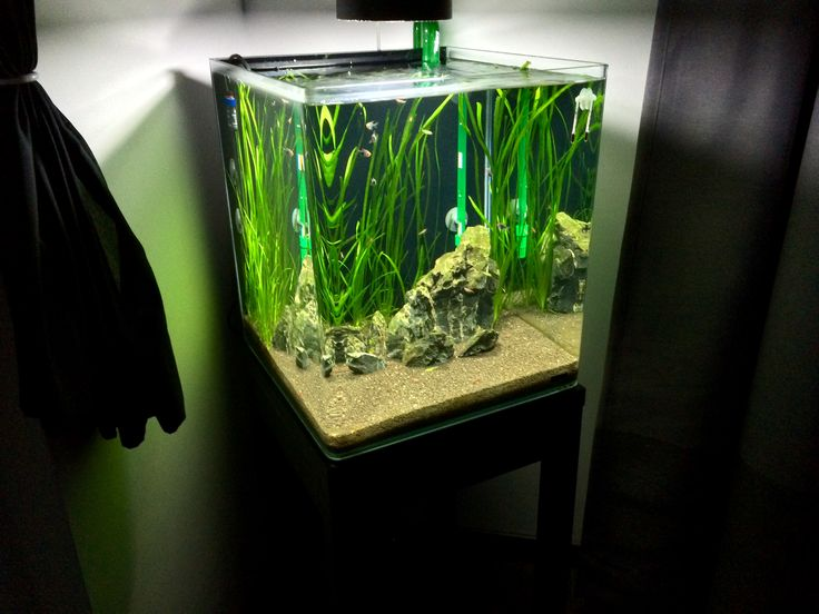 Dennerle cube 60 l
