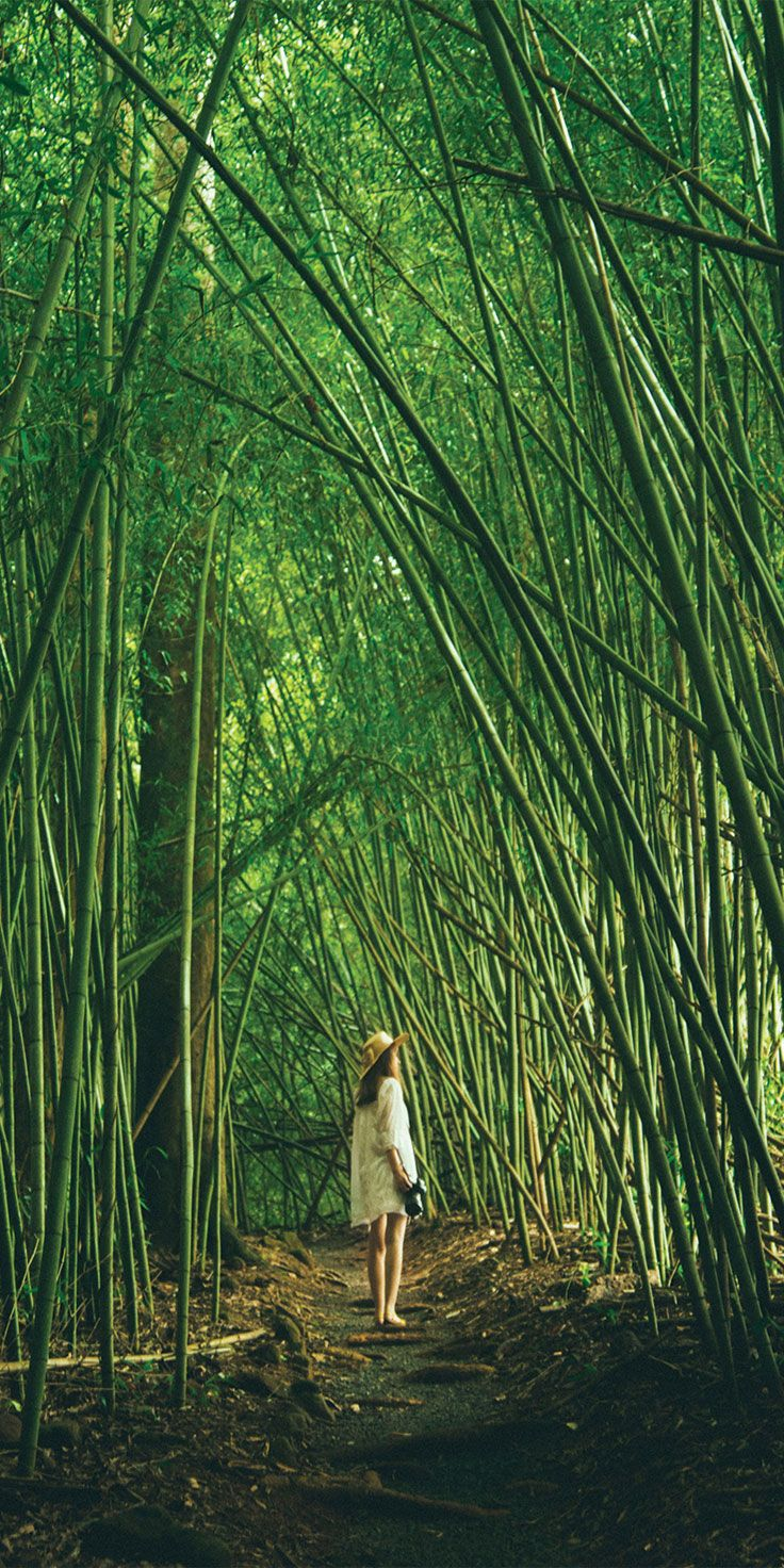 Paronella Park, Tropical North Queensland - by Noel Alva