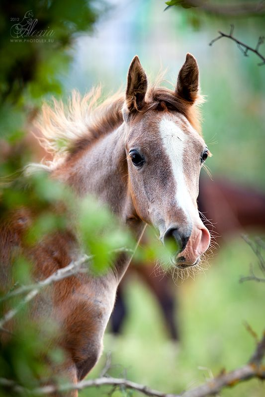 How can you not love a foal?  What a cutie