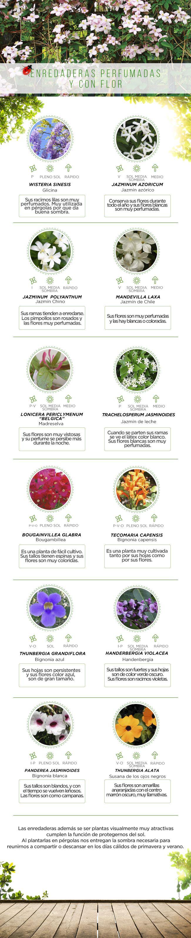 #Flores #Perfumadas #Easy #Jardinería #PasoApaso