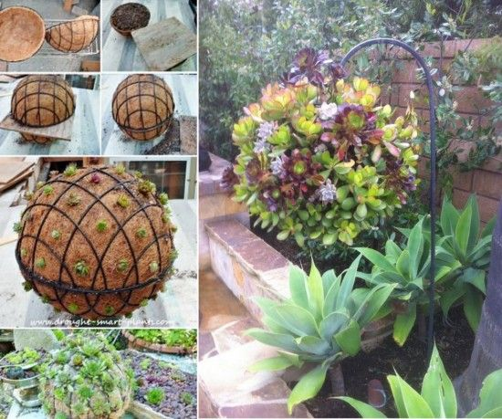 Tutorial:  How to Grow a Succulent Sphere via thewhoot.com.au
