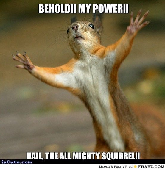 Stop! Squirrel Meme Generator - Captionator Caption Generator - Frabz