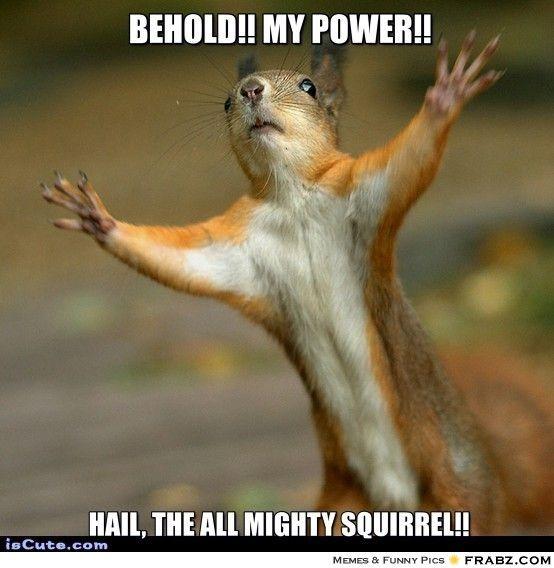 Stop! Squirrel Meme Generator - Captionator Caption Generator - Frabz