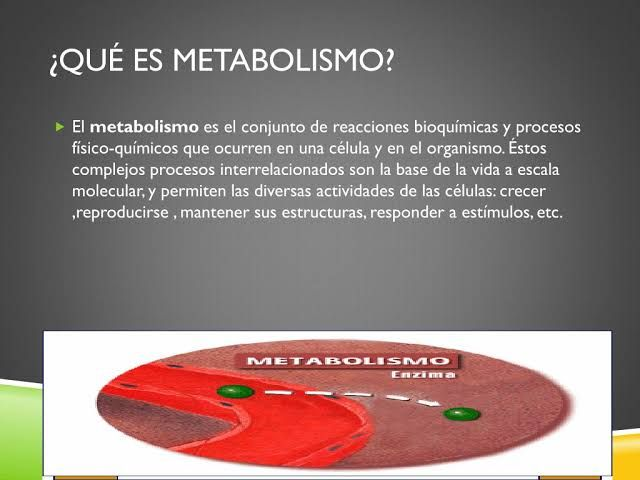 Usos eróticos que es metabolismo