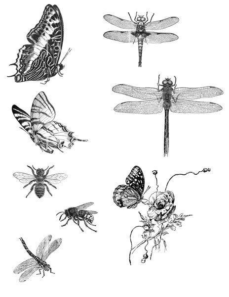 VICTORIAN NATURE Line Art Illustrations, Butterflies, Bees, Dragon Flies Black & White, Downloadable Vintage Digital Collage Sheet TV637 on Etsy, £1.27
