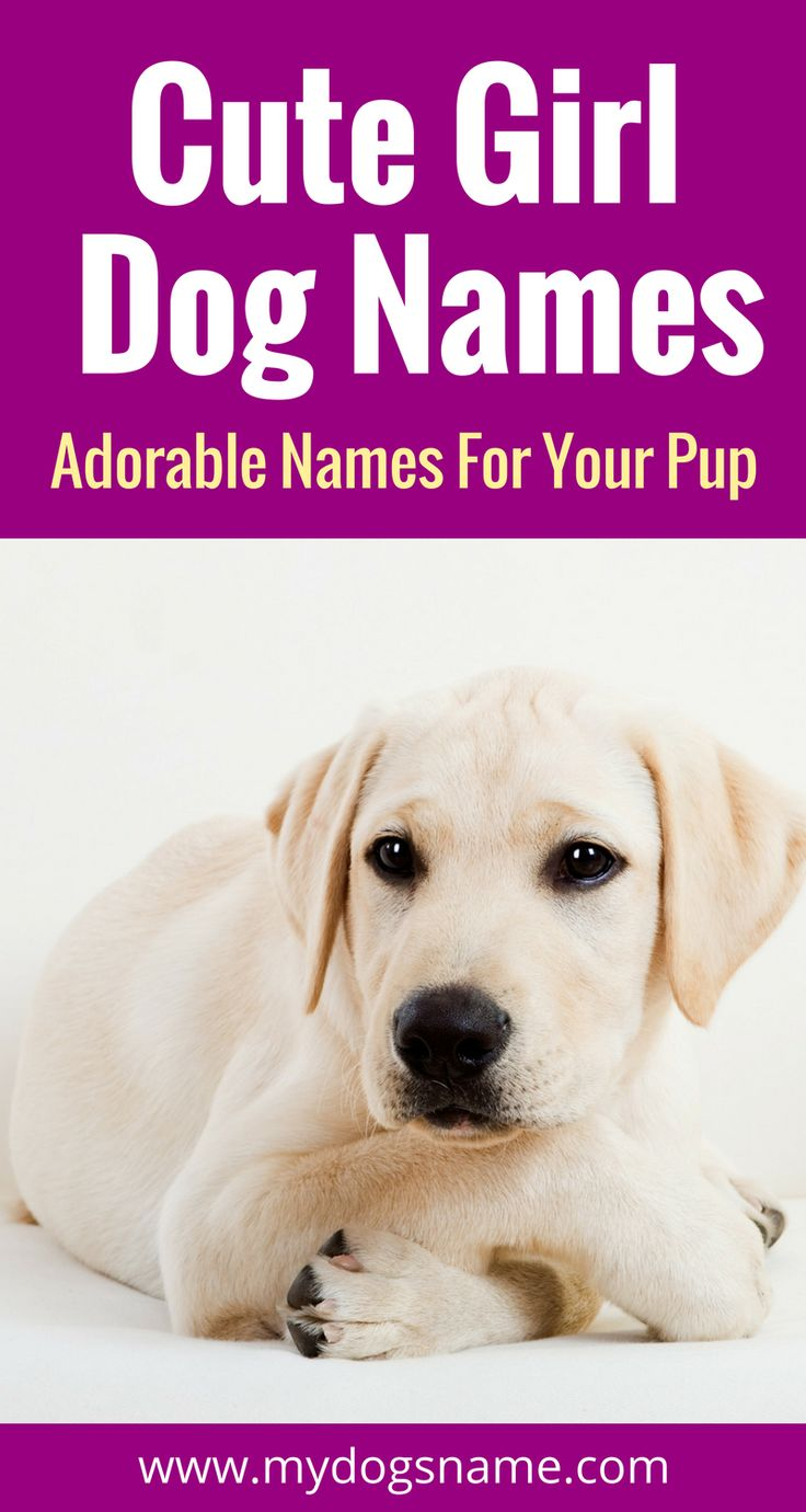 Absolutely adorable names for your new female furbaby. These cute girl dog names are doggone adorable!