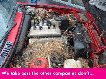 Car Donation Services- We make it easy to give and receive through vehicle donations #car #donation,vehicle #donation,donate #a #car,donate #a #vehicle,tax #writeoff #for #car #donation,fair #market #value #for #car #donation,free #towing,donate #my #car,car, #auto,vehicle, #writeoff,tax #deduction…