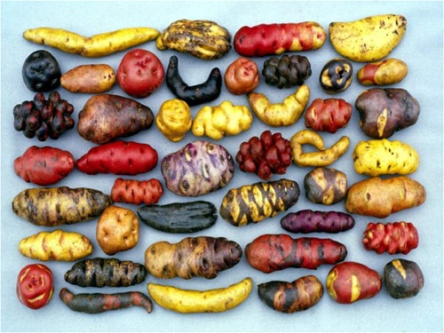 Exotic potatoes.  There is no point to this.