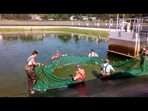 17 best ideas about fish hatchery on pinterest koi for Wisconsin fish farms