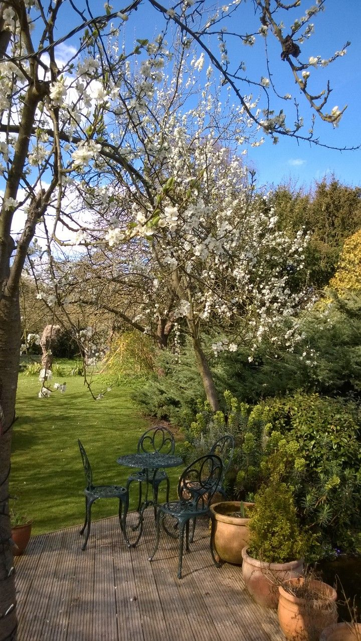 Garden looking pretty on an early Spring day