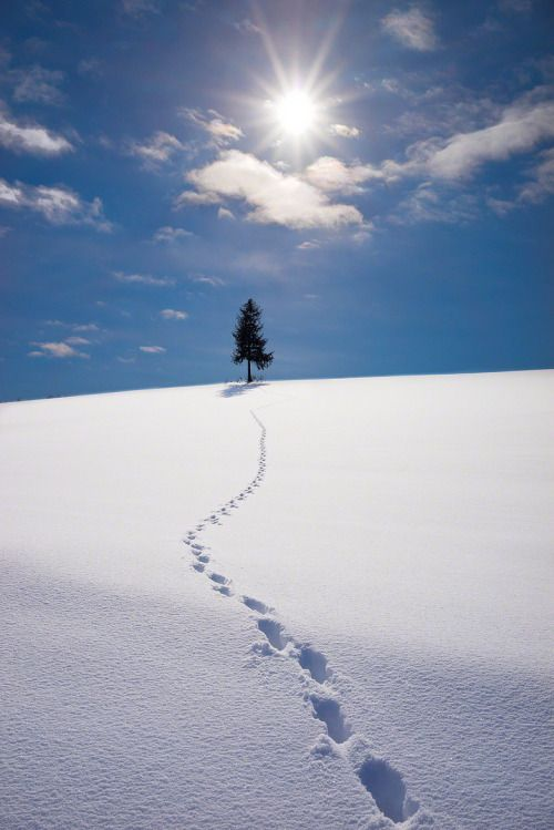 Biei, Hokkaido, Japan via The Sun On The Hill by Kent Shiraishi / 500px