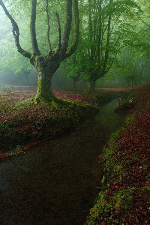 The Basque Forest – Basque Country