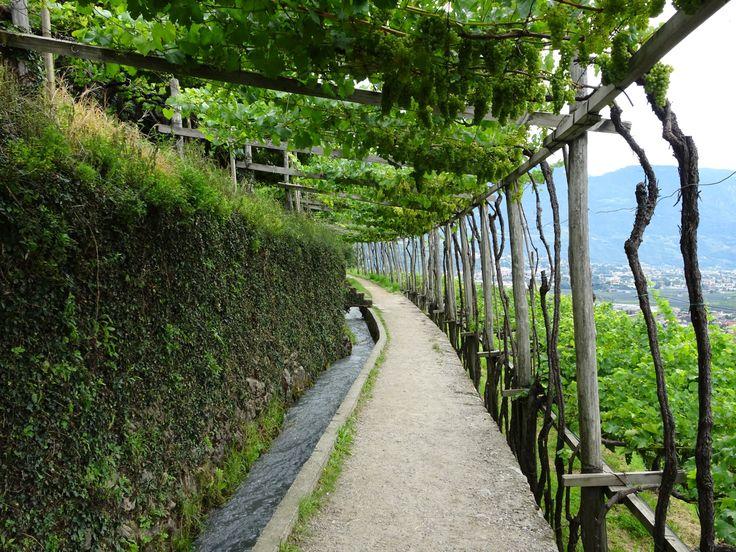 Sentiero delle Rogge - Waalweg Lagundo (apple orchard trail) - Italy