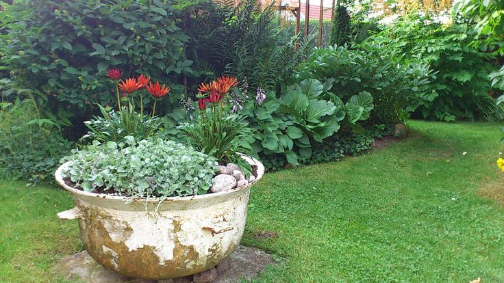 En detalj i trädgården.